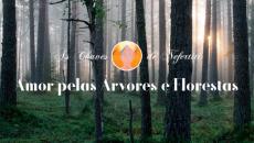 Série Amor: Amor Pelas Árvores e Florestas