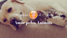 Série Amor: Amor Pelos Animais