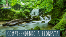 Compreendendo a Floresta