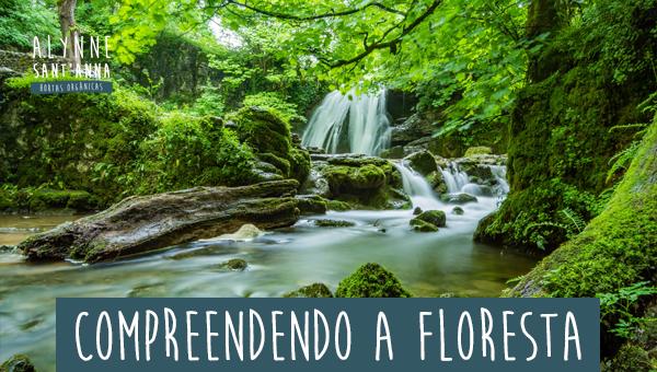 Compreendendo a Floresta