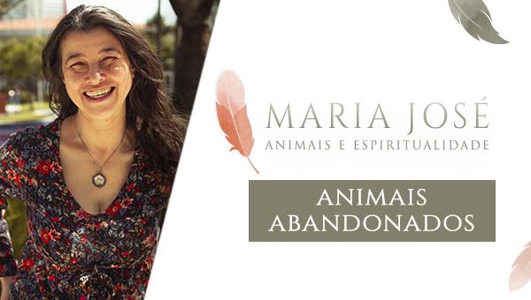 Animais e Espiritualidade - Animais Abandonados