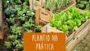 Plantio na Prática - Hortas Orgânicas