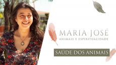 Animais e Espiritualidade - Saúde dos Animais