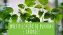 Multiplicação de Plantas e Cuidados
