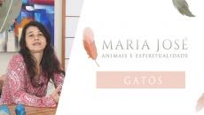 Animais e Espiritualidade - Gatos